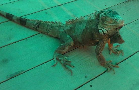 Corfu Aquarium: Джордж, любящий ласку и общение.