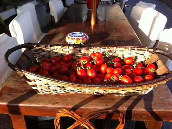 Bagno Bar Viola: божественные помидорини