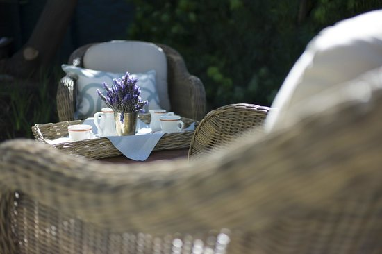 afternoon tea under our yellow wood trees - Picture of Trevoyan