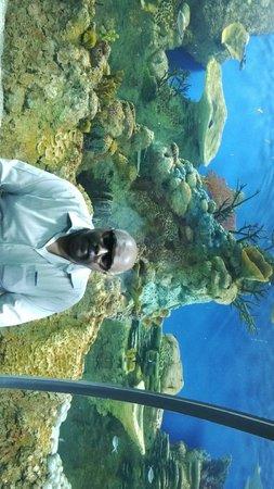 Fakieh Aquarium: Entrance tunnel