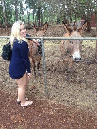 Brett's Kuranda Half Day Tour: Donkeys!