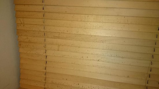 White Horse Inn: Photo of dirt splash on blind...