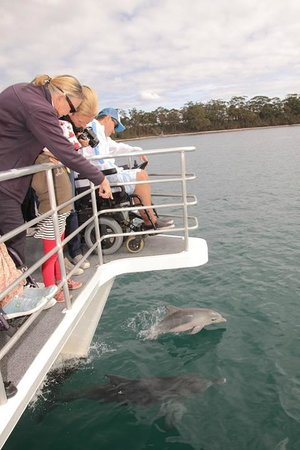 Jervis Bay Wild Cruises: Dolphin watching made easy