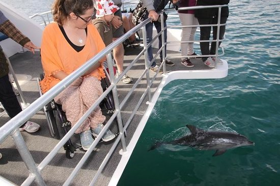 Jervis Bay Wild Cruises: Dolphins so close
