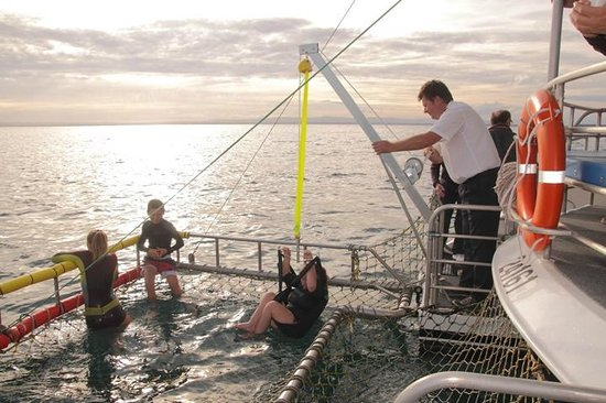 Jervis Bay Wild Cruises: How cool - going into the boom net
