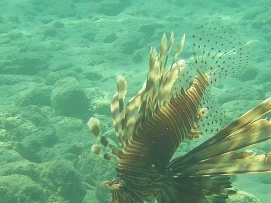 Happy Life Village: Lionfish