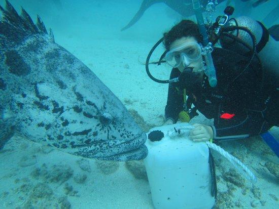 Deep Sea Divers Den Day Trips: My new friend, Mr Potato Cod