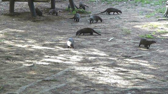 iSimangaliso Wetland Park: iSimangaliso - Cape Vidal (01)