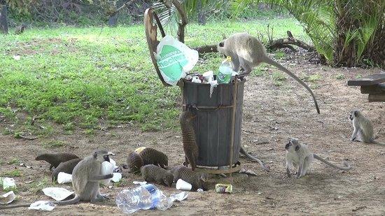 iSimangaliso Wetland Park: iSimangaliso - Cape Vidal (08)