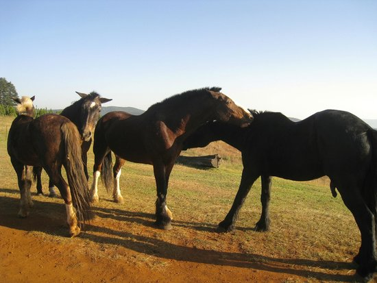 Kaapsehoop Horse Trails Day Trips: Kaapshoop Horses cleaning at end of day