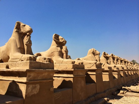 Avenue of Sphinxes: сфинксы