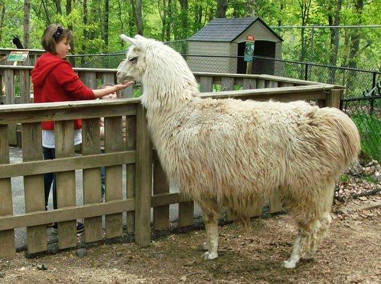 Tweetsie Railroad : Petting Zoo