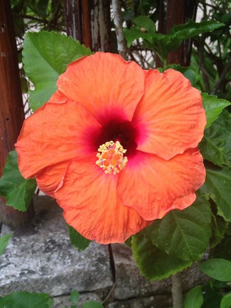 Maya Tulum Resort: Flowers on the property