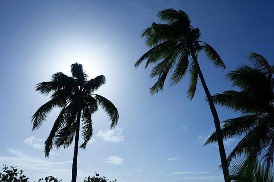 Mantaray Island Resort: The beach