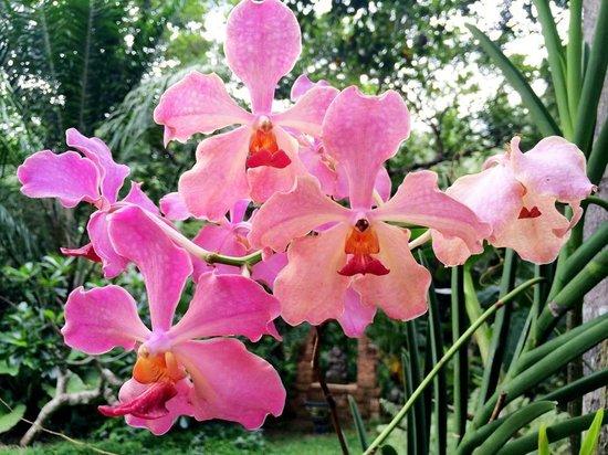 Apa Villa Illuketia: Flourishing flora at every corner