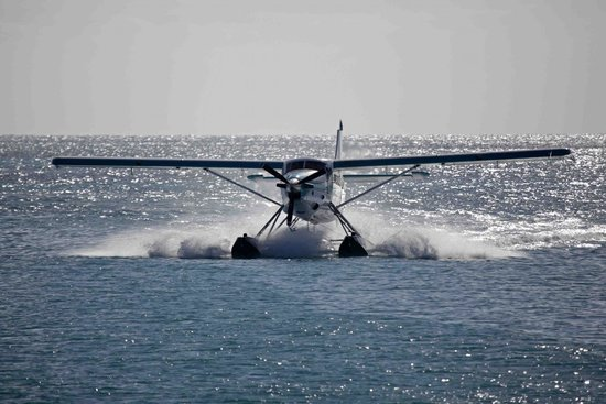 Dry Tortugas National Park: de havilland otter