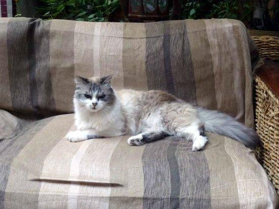 Riad Tara Hotel & Spa: オーナーの愛猫のTara