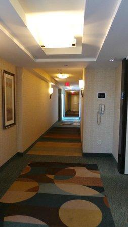 Hilton Garden Inn Toronto Downtown: Hotel Corridor