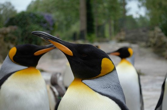 Birdland: Beautiful!