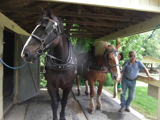 Monticello III Canal Boat Ride: These 2 horses pull the boat