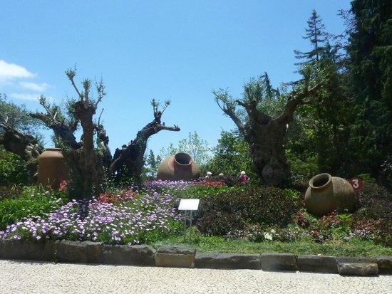 Madeira Botanical Garden : Entrée du jardin