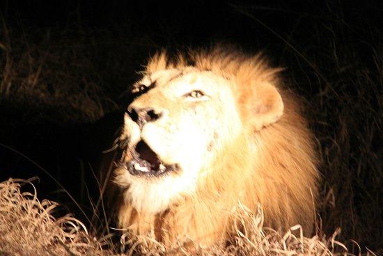 Sabi Sabi Earth Lodge: Incredible creature....
