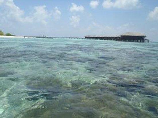 Filitheyo Island Resort : shallow part of reef