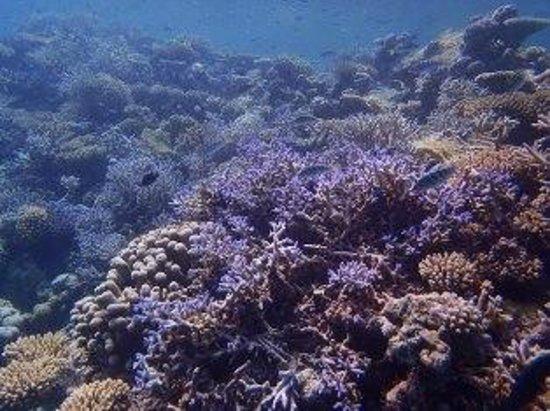 Filitheyo Island Resort : seascape