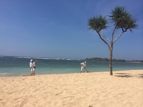 Nusa Dua Beach Hotel & Spa: Пляж, его постоянно чистят от водорослей
