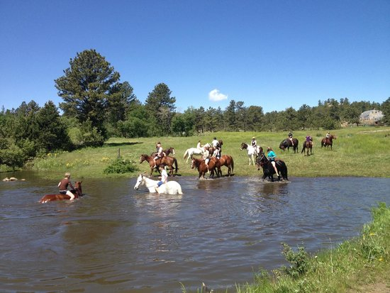 Sundance Trail Guest & Dude Ranch : swimming with the horses