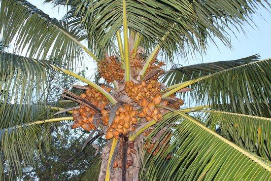 Sheraton Maldives Full Moon Resort & Spa : Plants