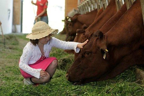 Kinderhotel Rudolfshof Vitality: Mädchen beim Kühe füttern