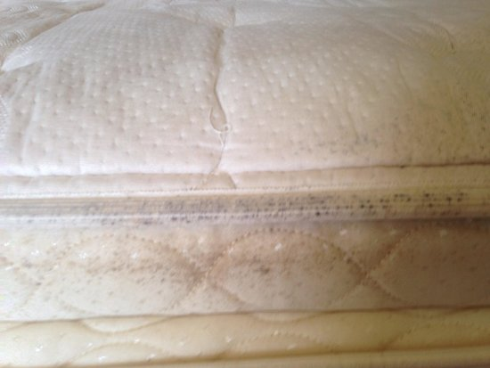 Golden Parnassus All Inclusive Resort & Spa Cancun : Mouldy mattress