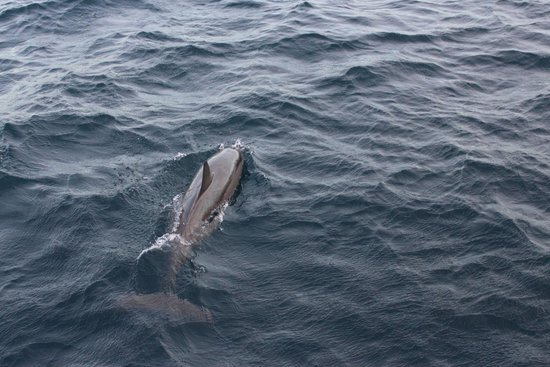 Sheraton Maldives Full Moon Resort & Spa : Dolphin Cruise