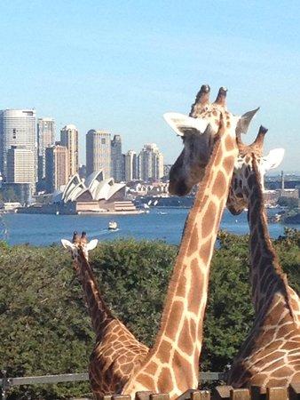Taronga Zoo: The zoo with a view