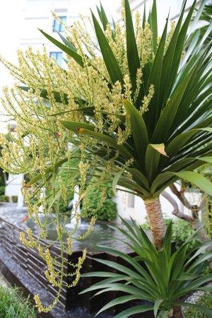 Tara Angkor Hotel: Plant in front