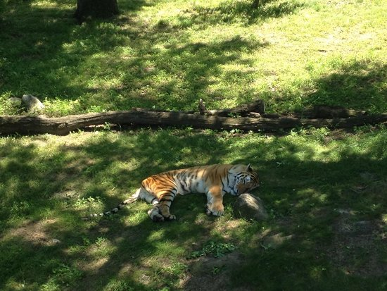 Bronx Zoo : It's too hot outside.