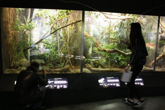 The Manchester Museum: Экспозиция