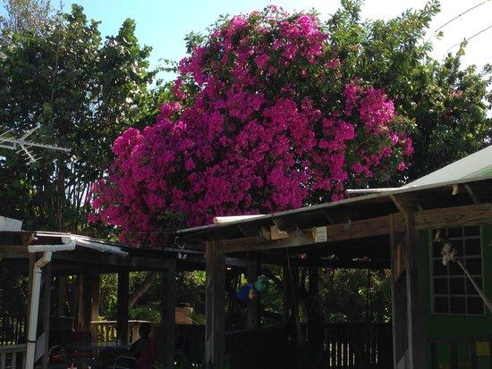 Culebra Beach Villas: Out