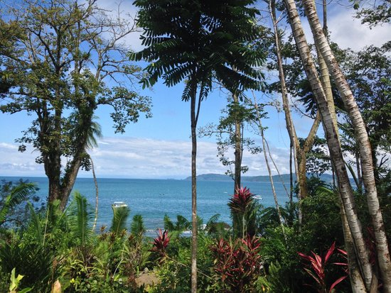 Copa de Arbol Beach and Rainforest Resort: View from the pool