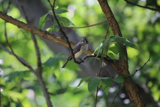 West Ridge Hollow B&B: Wildlife galore