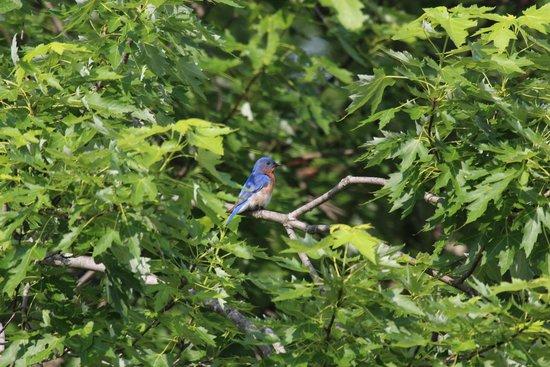 West Ridge Hollow B&B: More wildlife