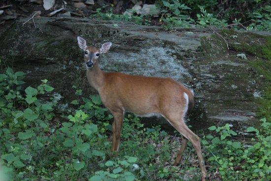 West Ridge Hollow B&B: In the backyard