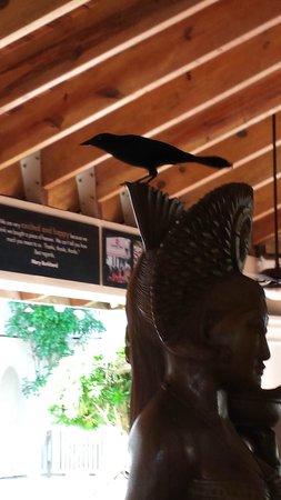 The Tropical at Lifestyle Holidays Vacation Resort: More birds.