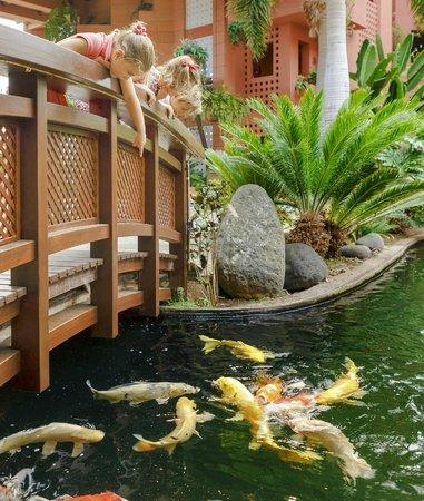 The Ritz-Carlton, Abama: Koi carps pond