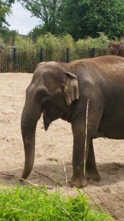 Dublin Zoo: Elephant
