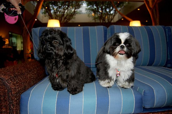 Portola Hotel & Spa at Monterey Bay: Pet Friendly