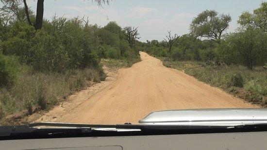 Satara Rest Camp : Kruger - Orpen Gate => Satara Camp