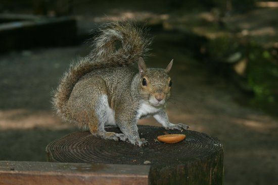 Yellow River Game Ranch: Hand feeding a squirrel