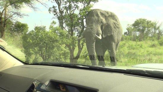 Satara Rest Camp : Kruger - Satara Camp => Kruger Gate